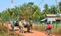 Ox Cart Ride